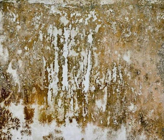 Mold Remediation Some Alarming Things About Mesa Mold Damage in Your Home